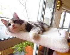 Cat window Hammock XL