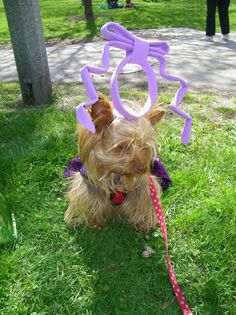 The winner of the Easter Bonnet contest is.....
