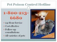 PET POISON CONTROL HOTLINE; (created for use in Power Point presentation in clinic lobby while throwing in educational content for clients)