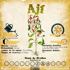 Eco Garden, Vegetable Garden Design, Self Watering Plants, Savage Garden, Water Plants, Growing Vegetables, Garden Projects, Container Gardening, Planting Flowers