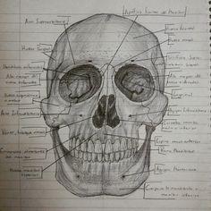 Estudio del Cráneo