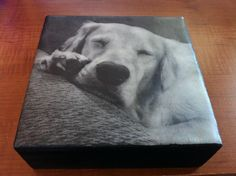 Tequila the golden retriever, sleeping. Encaustic photo transfer by CreativeArfs.com - items like this can also be found at www.etsy.com/shop/XinaArts