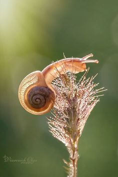 Snail by Olga Viarenich on 500px