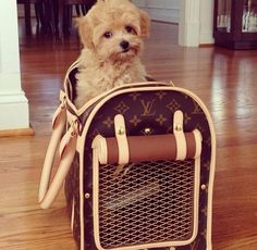 Louis Vuitton Dog Carrier
