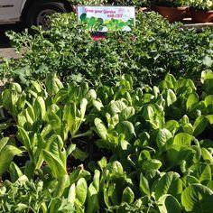 #Queens has plenty of #greens! Forest Hills Greenmarket #farmersmarketnyc
