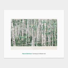 you can't see the forest for the trees  by marcel odenbach (2003)