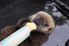 Image result for SEA OTTER CHRISTMAS CARDS