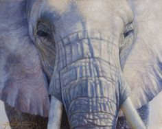 Amani - 16x20 SOLD for $2900 Oil on canvas I recently returned from an incredible 4 weeks in Africa and this is the first painting I completed after my travels back at the studio. I watched this African elephant from my vehicle throw dust all over herself. It was a very peaceful and humbling moment. Naturally I named this Amani, which means 'peace' in Swahili. Her calm composure was sweet to capture. #elephant #africa #safari #wildlifeart #animals #nature #wildlife #oilpainting #fineart #art