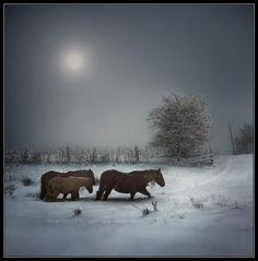 Beautiful!   #horses #snow