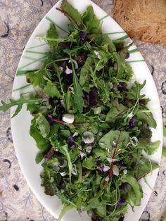Salade met wildpluk kruiden