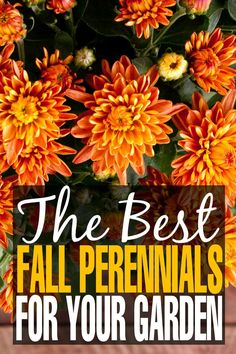 The Best Fall Perennials for your Garden & Gardening Tips for Autumn