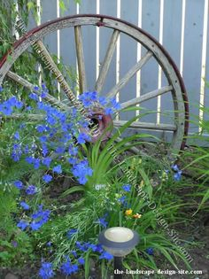 The wagon wheel and beautiful blue flowers accent each other, the two of them make a wonderful display in this garden. Alone, the wagon wheel may seem misplaced. With accent garden plants around it, it becomes the centerpiece of the display. Love both of the...so stunning!!