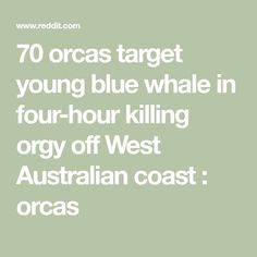 70 orcas target young blue whale in four-hour killing orgy off West Australian coast : orcas Cute Whales, Orcas, Blue Whale, Target, Coast, Killer Whales, Target Audience, Goals