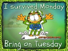 I survived Monday, bring on Tuesday garfield tuesday tuesday quotes tuesday pictures tuesday images garfield tuesday quotes Tuesday Quotes Funny, Tuesday Quotes Good Morning, Funny Good Morning Memes, Tuesday Humor, Monday Quotes, Its Friday Quotes, Good Morning Greetings, Funny Quotes, Emo Quotes