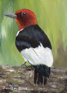 Red Headed Woodpecker ACEO Bird Wildlife Original Bird ACEO Acrylic Painting