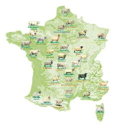 FRANCE: RACES OVINES