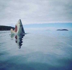 When you're swimming & something touches your foot. 😱😂 📷 Cute Emergency🎄 #EPIC #Hilarious #BIZBoost 🚀