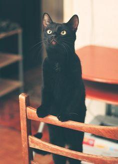 http://corporation-cats.tumblr.com/post/117669563520