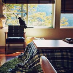 inanekoさんの、ワッフル編みのモコモコ感大好きです,ケットをコタツカバーに,ペット,猫ハンモック,こたつ,カリモク60,猫,インド綿マドラスチェックワッフルケット,無印良品,リビング,のお部屋写真