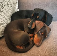 Just a couple of snugglers 🐶🐶 Dachshund Breed, Dachshund Love, Cute Dogs And Puppies, Baby Dogs, Cute Dog Pictures, Weenie Dogs, Cute Little Animals, Dog Love, Dog Breeds