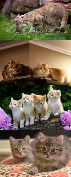 *** Adorable cats ***