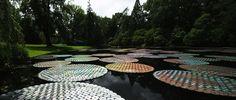 ชาวเพนซิลเวเนียตะลึง! ใบบัวซีดีผุดขึ้นกลางสระน้ำในสวนสาธารณะ