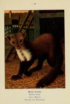 Atlas de poche des mammifères de France, de la Suisse romane et de la Belgique : - Biodiversity Heritage Library