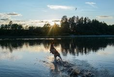 ZoePhee: Swimming and Running! Fit Dog Friday