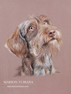 Uplifting Learn To Draw Faces Ideas. Incredible Learn To Draw Faces Ideas. Animal Paintings, Animal Drawings, Art Drawings, Arte Dachshund, Color Pencil Art, Pastel Art, Watercolor Animals, Wildlife Art, Dog Portraits