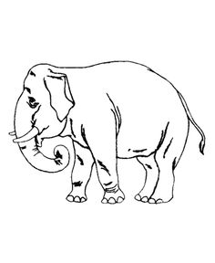 Wild Animal Coloring Page Free Printable Elephant Pages Featuring Trained Work Sheets