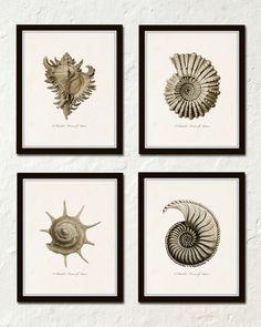 Sepia Seashell Print Set No. 5, Ernst Haeckel, Giclee, Canvas Art, Wall Art…