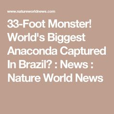 33-Foot Monster! World's Biggest Anaconda Captured In Brazil? : News : Nature World News