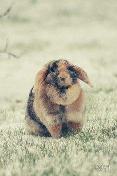 chubby bunny love