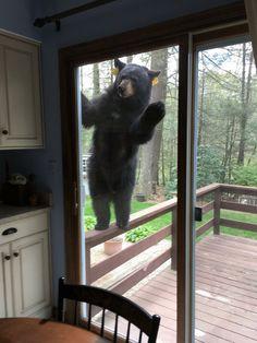 Oh, Herro Hooman, it's just me, Bear