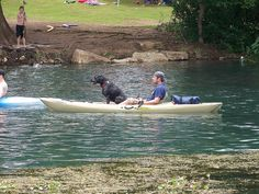A kayaking dog on the river in San Marcos, TX.