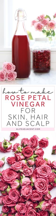 DIY flower infusion — learn to make rose petal infused vinegar with apple cider vinegar and organic dried rose petals. This rose petal vinegar has a variety of therapeutic uses for skin, hair, and scalp care. It can aid in soothing ailments such as acne, rosacea, eczema, dermatitis, itching, irritation, sunburn, bug bites, hives, allergic reactions and more. Rose petal vinegar is astringent, anti-inflammatory, analgesic, antimicrobial, and antioxidant. Bottom photo © Nik_Merkulov / Adobe…