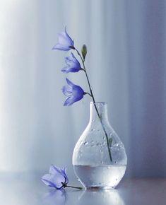ideas for beautiful nature photography flowers water Water Flowers, Blue Flowers, Flowers Nature, Nature Tree, Glass Flowers, Art Floral, Ikebana, My Flower, Flower Art