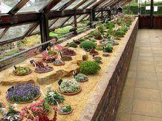 02 August 2007 - Wisley's Alpine Diary - Gardeners' Diaries - Alpine Garden Society