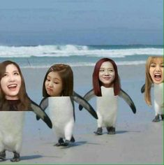 Memes Blackpink, Funny Kpop Memes, Black Pink Songs, Black Pink Kpop, Blackpink Photos, Funny Photos, Meme Faces, Funny Faces, K Pop