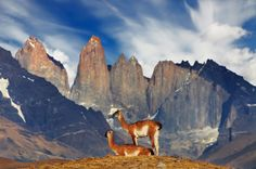 Chilie. The Cordillera del Paine is a small group of mountains and the centerpiece of the Torres del Paine N... - Thinkstock/istock