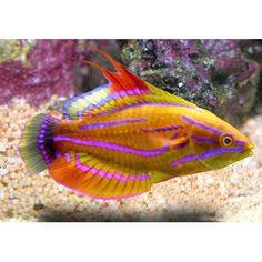 1000 images about aquarium on pinterest reef aquarium for Petco saltwater fish