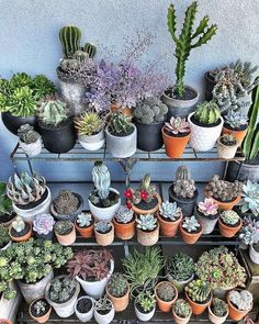 Beauty Cactus and Succulent Garden Ideas for Indoor Succulents In Containers, Cacti And Succulents, Planting Succulents, Cactus Plants, Garden Plants, House Plants, Nature Plants, Desert Plants, Arizona Gardening