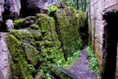 """Hitler's """"Wolf's lair"""" ( Wolfsschanze, Vilko guolis ) ruins"""
