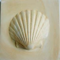 conchas do mar - Resultados Searchya - Search Results Yahoo Search da busca de imagens