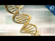 5 Genetic Discoveries in 2013    2013 was a big year in the world of gene research. We're learning incredible things about why we are the way we are.