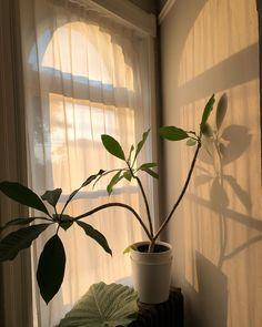 19 Ideas for plants aesthetic light Aesthetic Light, Cream Aesthetic, Plant Aesthetic, Brown Aesthetic, Aesthetic Vintage, Aesthetic Photo, Aesthetic Pictures, Leelah, Living In London