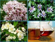 4 plantas medicinales para el insomnio