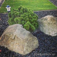 The Benefits of Eating Organically Grown Vegetables Garden Compost, Vegetable Garden, Gardening, Garden Beds, Home And Garden, Different Vegetables, Bonsai Garden, Going Natural, Live Long