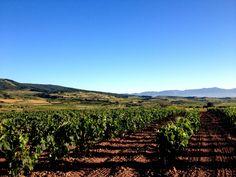 El Camino en la Rioja