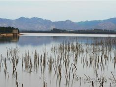 Theewaterskloof Dam, Villiersdorp, Western Cape, South Africa